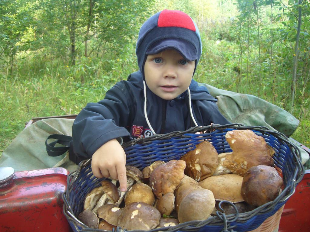 Kreativno: Gljive na tanjiru mališana